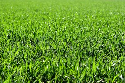 4 основни стъпки за създаване на тревни площи