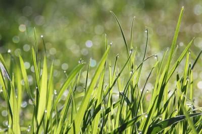 Проблеми при поддръжката на тревна площ 66